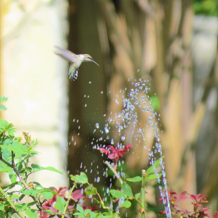 Bird, In Flight, Fountain, Hummingbird, Interesting