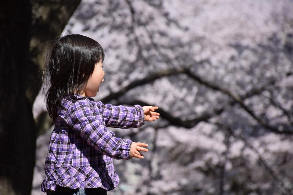 Cherry, Spring, In Full Bloom, Children, Surprise, Park