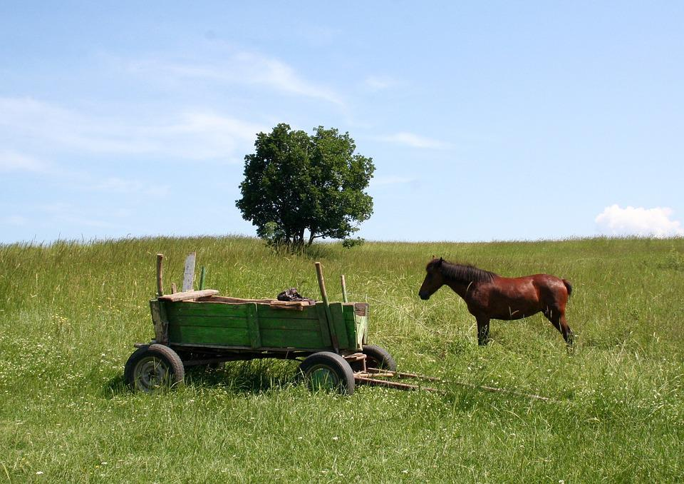 Cart, Horse Cart, In The Cart