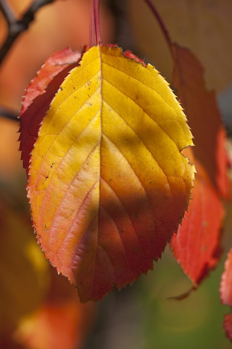 Autumn, Leaf, Garden, Foliage, In The Fall, Red