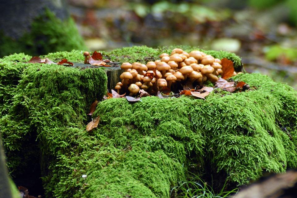 Mushrooms, Forest, Moss, In The Fall, Mushroom, Nature