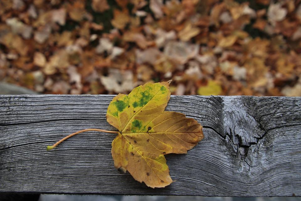 Leaf, Autumn, Collapse, Leaves, In The Fall, Wooden