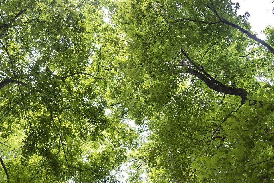 Green, In The Forest, I, Abstract, The Leaves, Wood