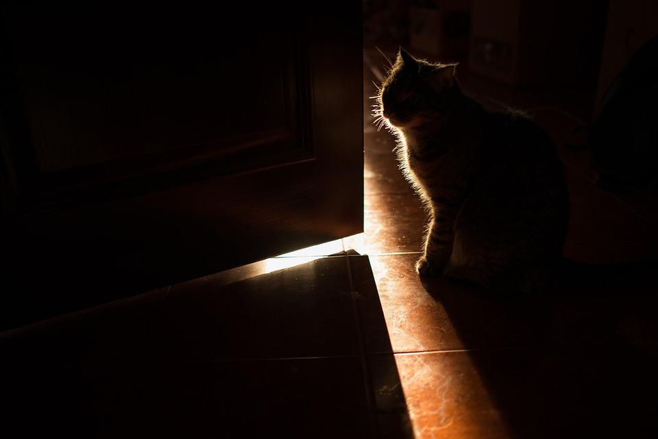 Cat, Dark, Pet, Pugnacity, Wool, Mustache, In The House