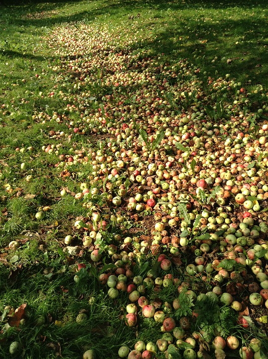 Apples, Garden, Fruit, In The Summer Time, A Lot