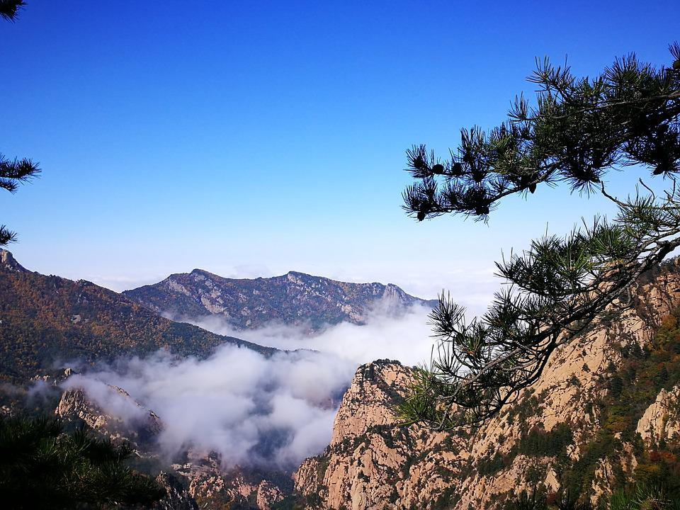 In Wuling Mountain, Clouds, Pinus Tabulaeformis