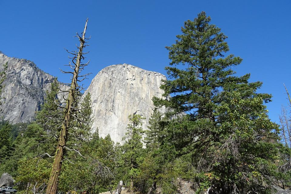 Yosemite, National Park, El Capitan, Incense Cedar