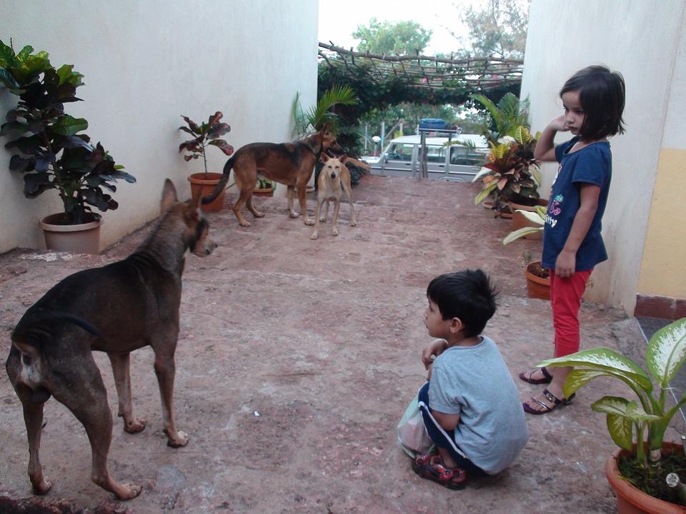 Impression, India, Children, Dogs, Ganpatipule, Boy