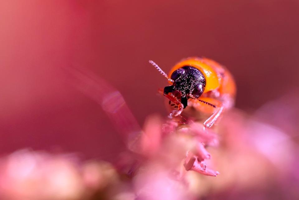 Beetle, India, Kerala