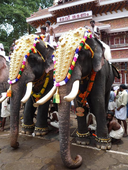 Elephants, Indian, Kerala, Festival, South India