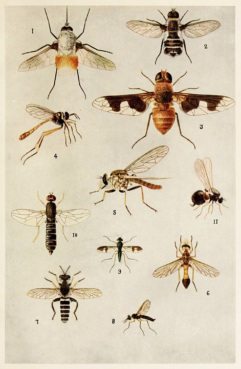 Insects, Indian, Life, Harold, Maxwell, Lefroy, Book