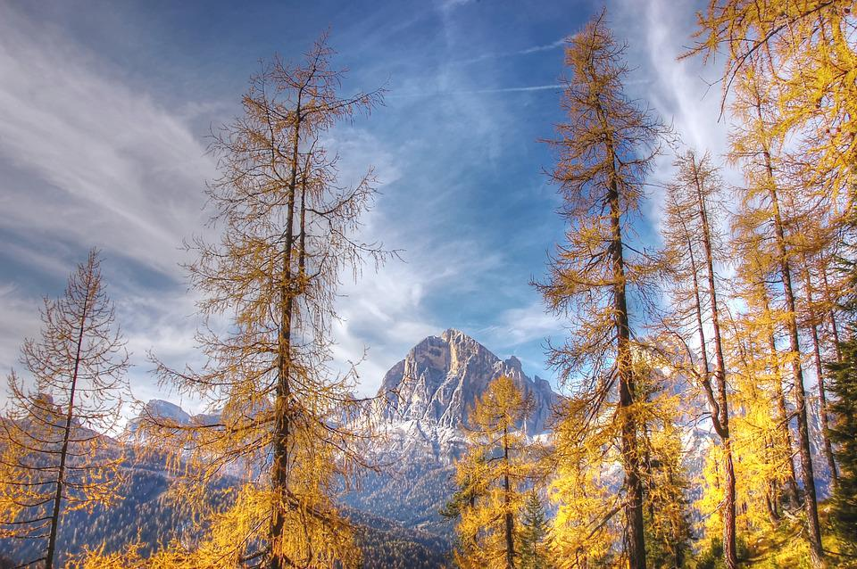Indian Summer, Dolomites, Alm, Nature