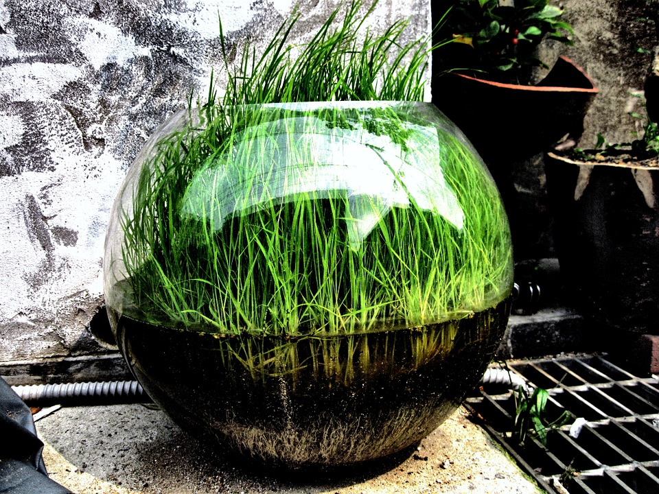 Grass, Bowl, Green, Turf, Art, Street Art, Indie