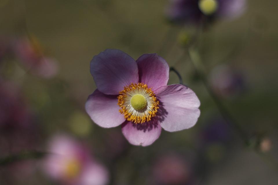 Flower, Bloom, Nature, Individual, Violet, Purple