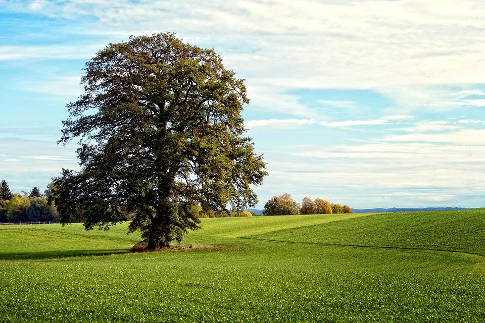 Tree, Individually, Landscape, Chiemgau, Bavaria