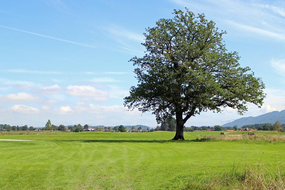 Landscape, Chiemgau, Tree, Individually, Meadow