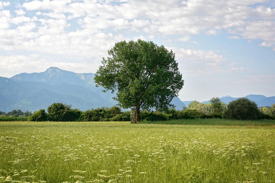 Tree, Individually, Nature, Green, Meadow, Sky