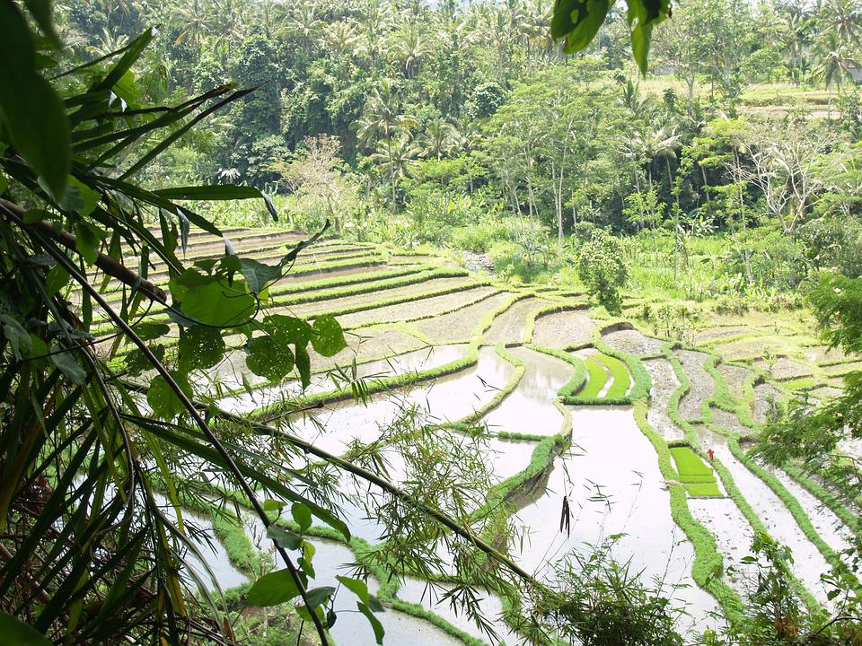 Bali, Indonesia, Rice Field, Irrigation, Water