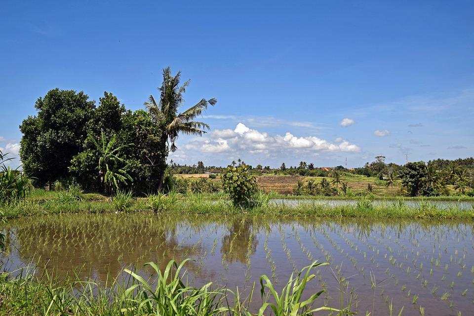 Bali, Indonesia, Travel, Rice Fields, Nature, Landscape