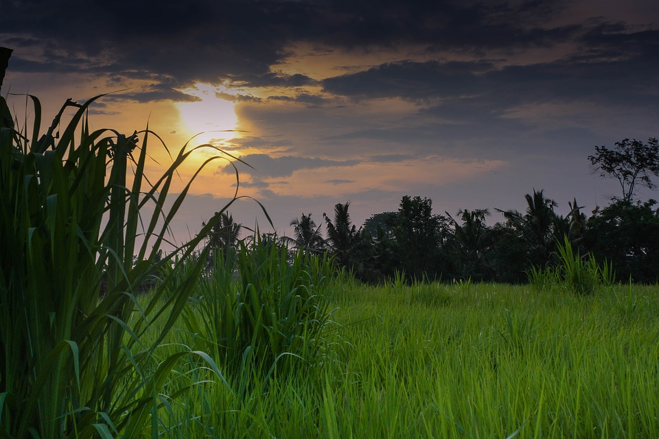 Indonesia, Bali, Sunset, Colors, Paddies