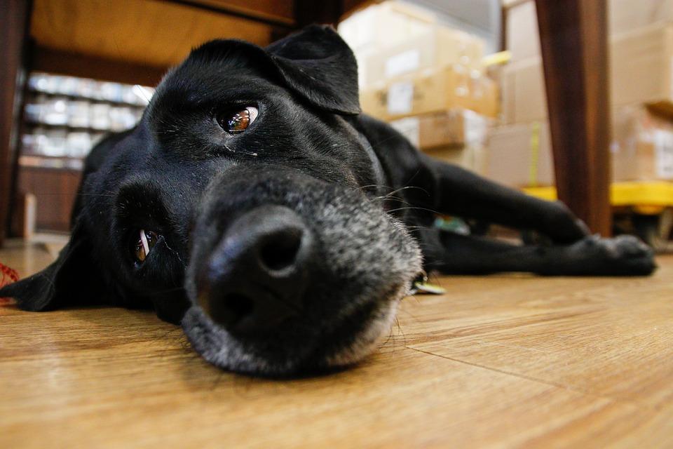 Taiwan, The Black Dog, Indoor