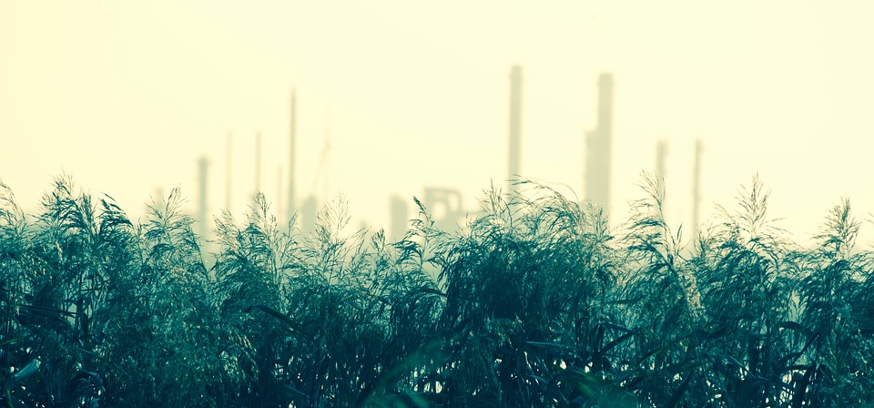 Industry, Reed, Nature, Industrial, Environment