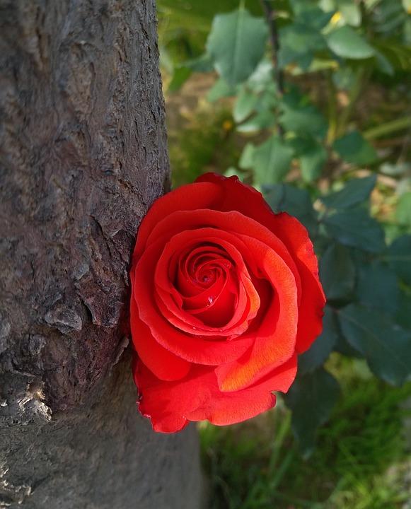 Flower, Blossom, Floret, Inflorescence, Pompon, Posy