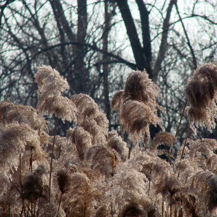 Grass, Tall, Inflorescence, Flowers, Wild, Flora