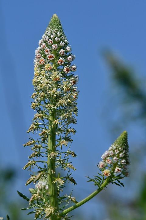 Flowers, Plant, Flora, Inflorescence, Spring, Bloom