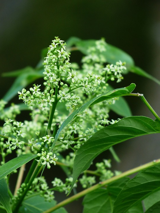 Flowers, Inflorescences, Leaves, Foliage