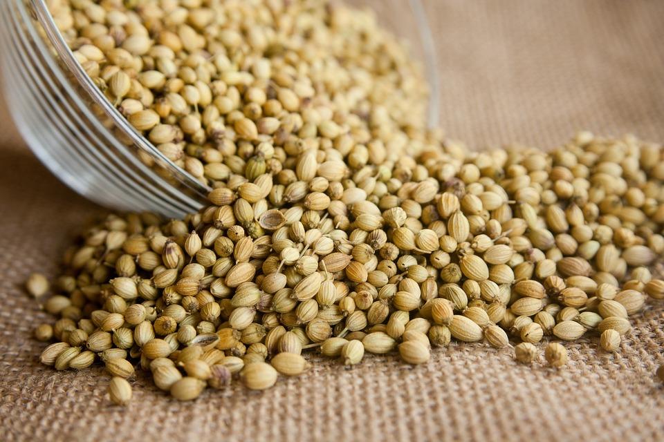 Coriander, Seeds, Seasoning, Ingredient, Herb, Fresh