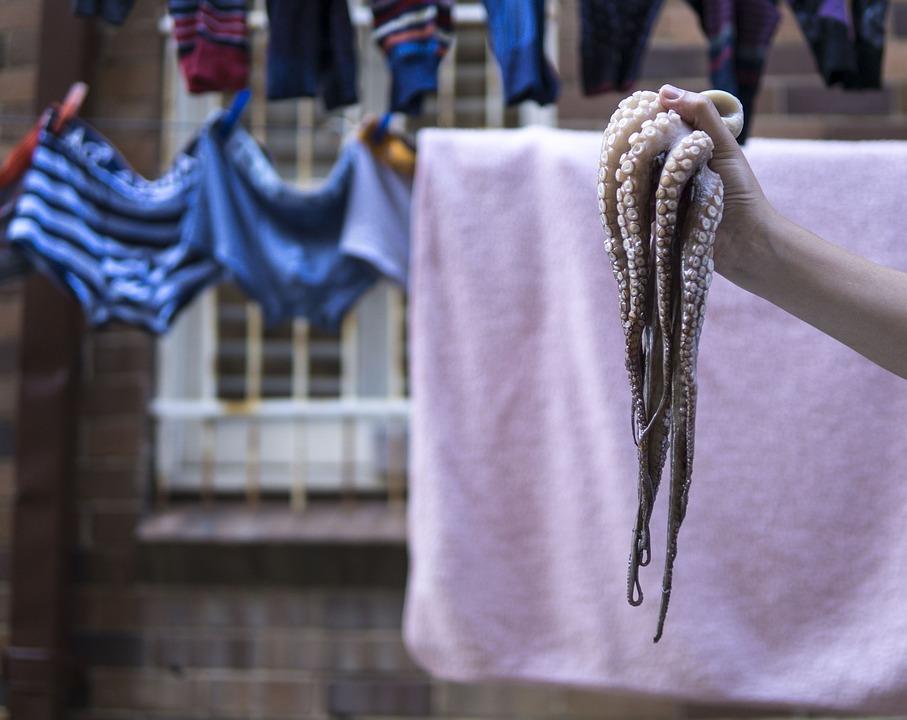 Octopus, Photoshoot, Fun, Ingredients, Seafood, Washing