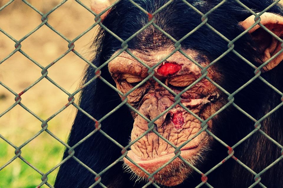 Animal Welfare, Cruelty To Animals, Injury, Injured