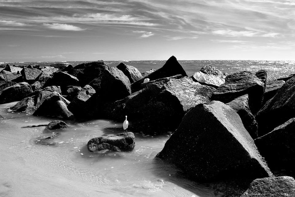 Ocean, Jetty, Beach, Rocks, Inlet, Monochrome, Egret