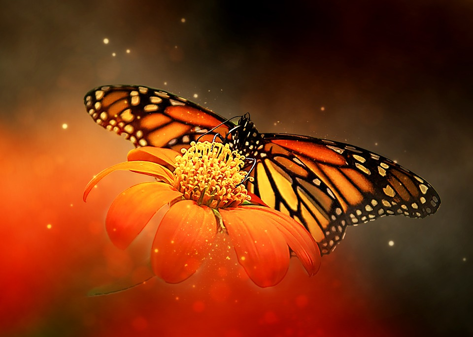 Butterfly, Insect, Colorful, Nature, Nursing, Animal