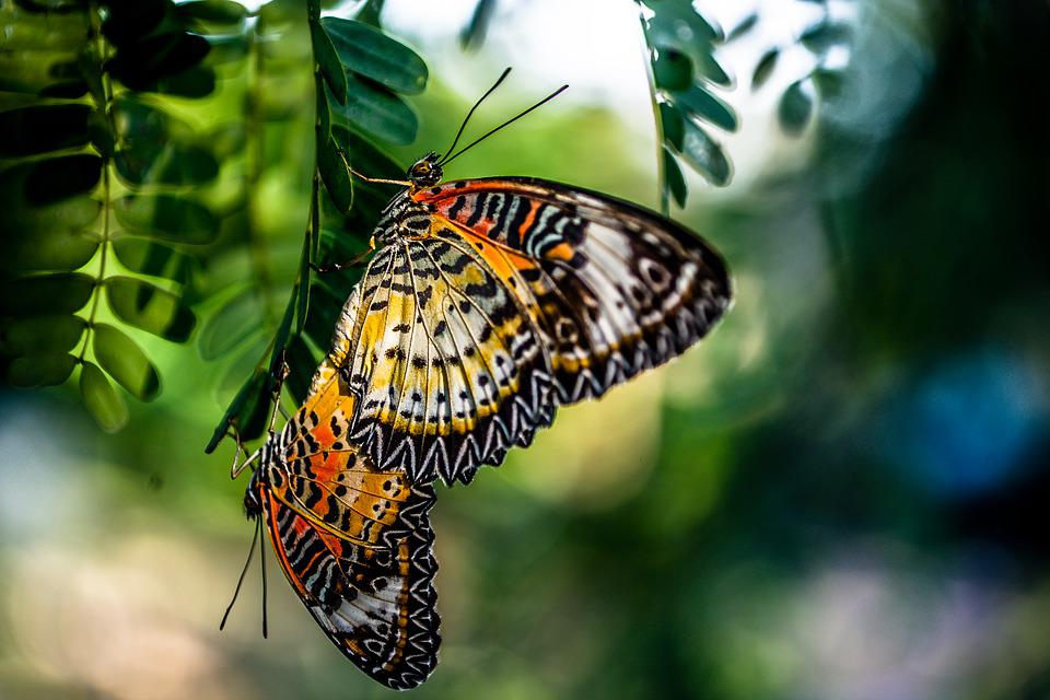 Animal, Insect, Nature, Butterfly, Bloom, Wings, Flower