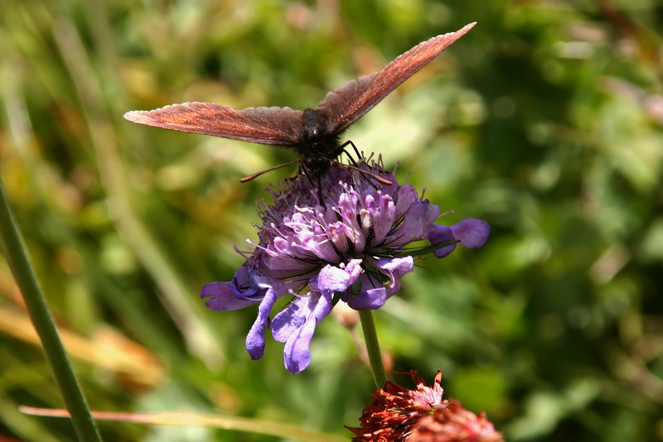 Butterfly, Flower, Insect, Nature, Animal, Summer