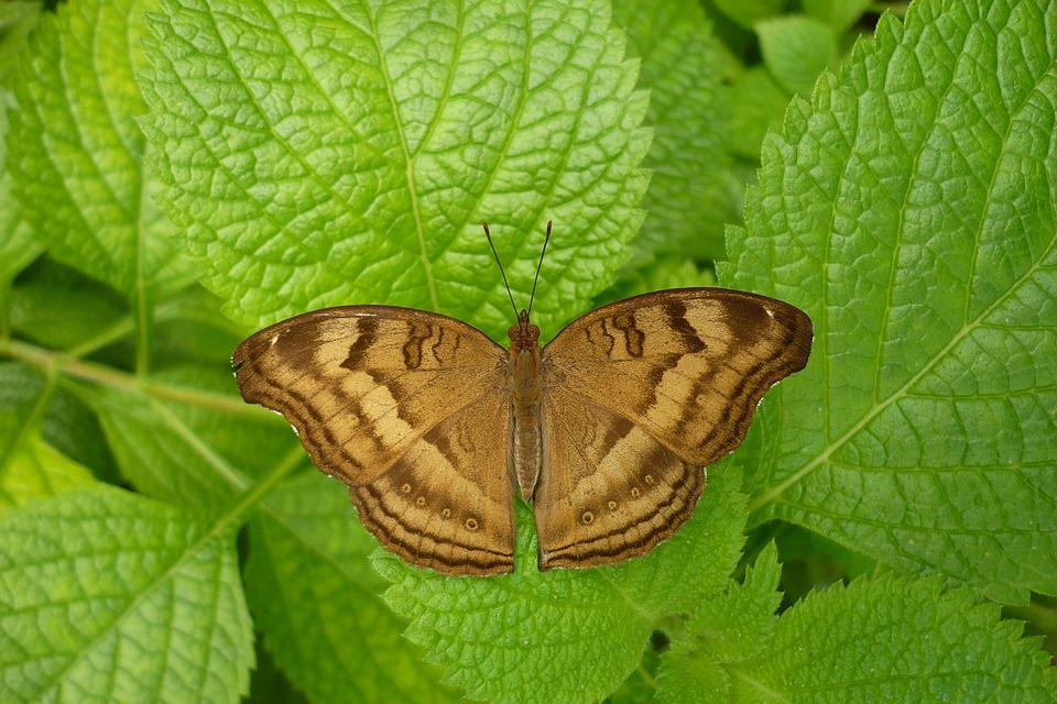 Butterfly, Nature, Animal World, Insect