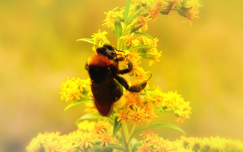 Bumblebee Gas, Insect, Flower, Apiformes, Animals