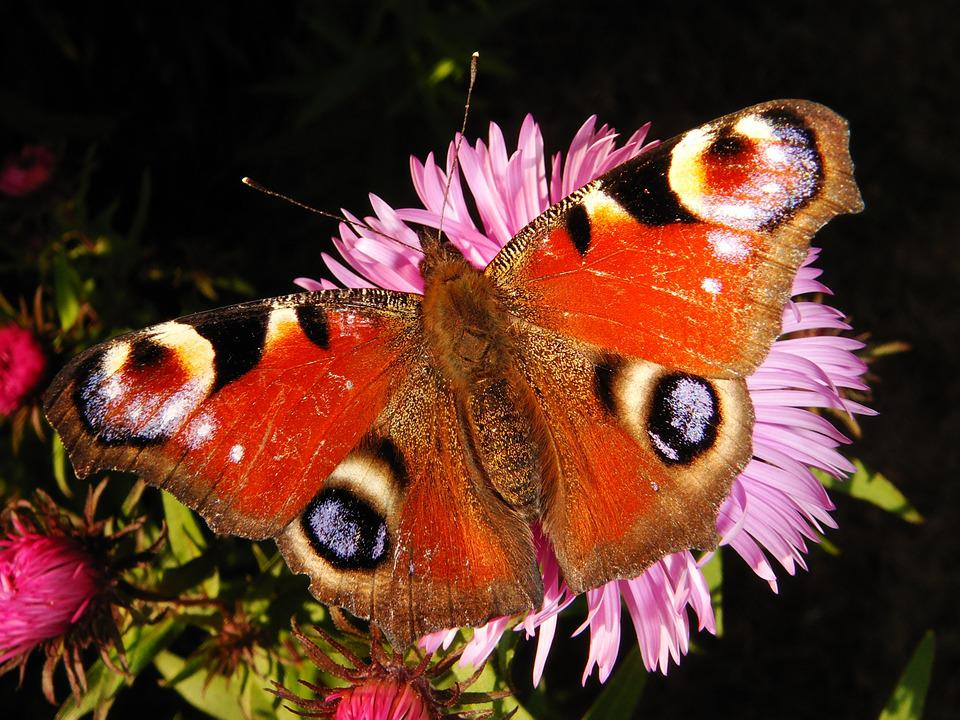 Nature, Butterfly Day, Insect, Color, Animals