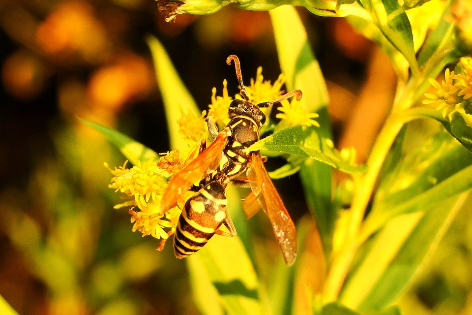 Nature, Insect, Plant, Flower, Leaf, Animals, Osa