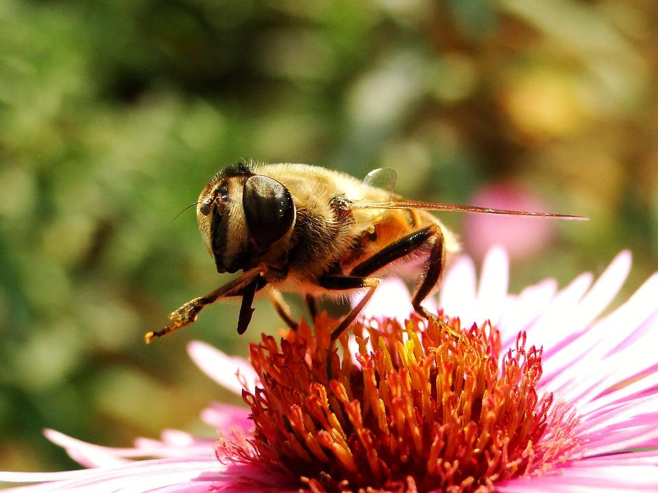 Nature, Insect, Flower, Plant, At The Court Of, Animals