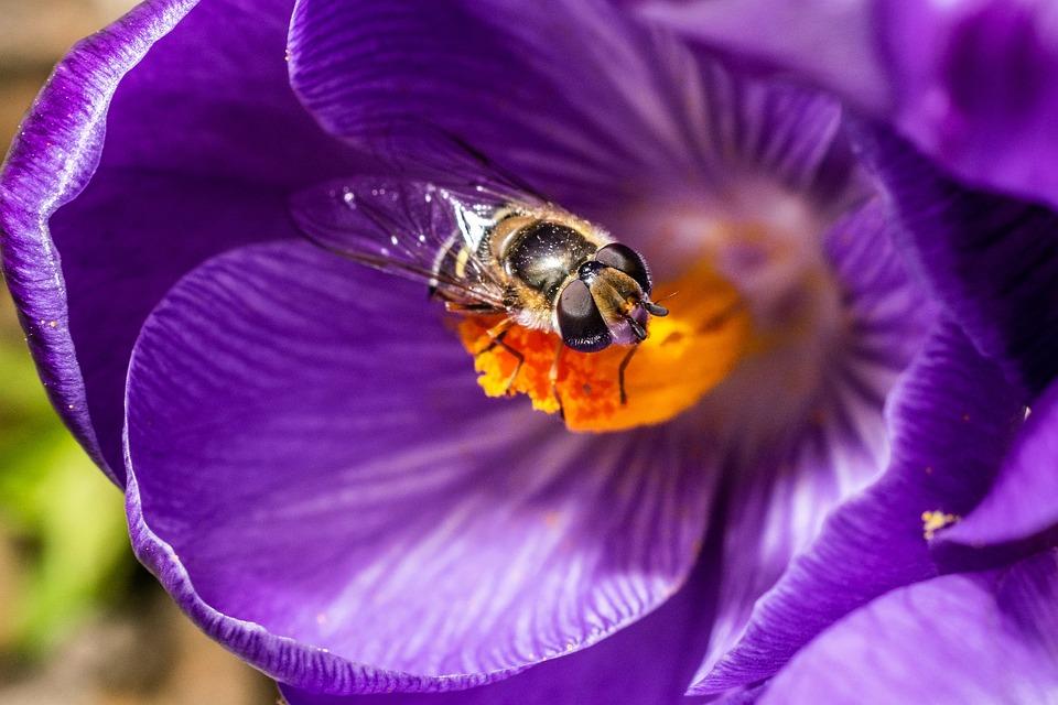 Flower, Nature, Garden, Spring, Insect, Bee, Macro