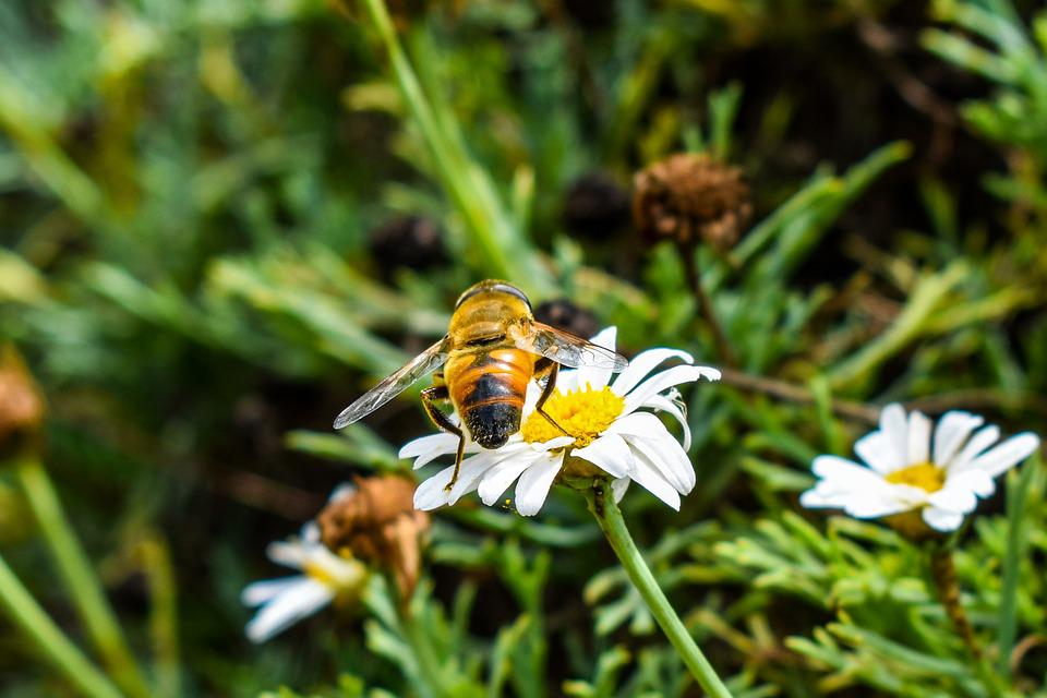 Bee, Nature, Insect, Plant
