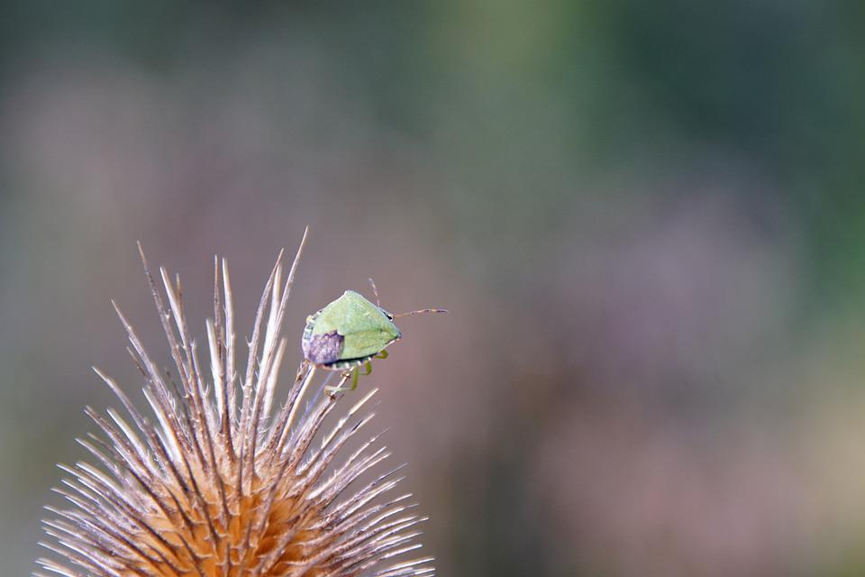 Beetle, Insect, Entomology, Species, Nature, Macro