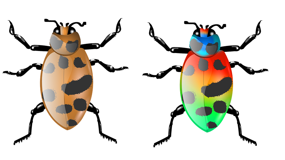 Beetle, Insect, Bug, Animal, Nature, Wildlife, Fly
