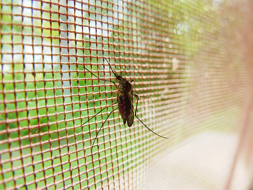 Mosquito, Bug, Insect, Pest, Disease, Malaria, Blood