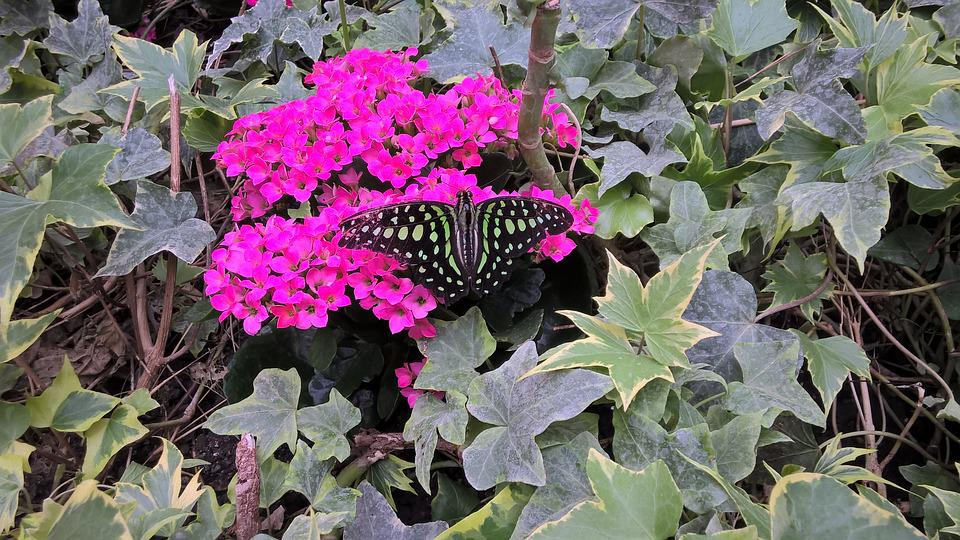 Butterfly, Blossom, Bloom, Nature, Insect