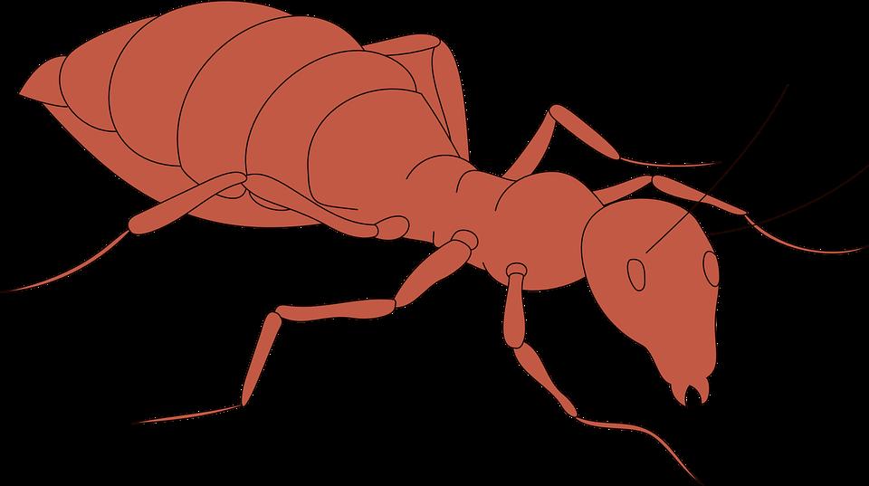 Orange, Ant, Body, Segmented, Insect, Walking, Legs