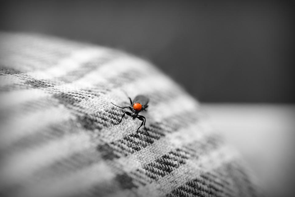 Insect, Bug, Beetle, Fabric, Cloth, Sleeve, Arm